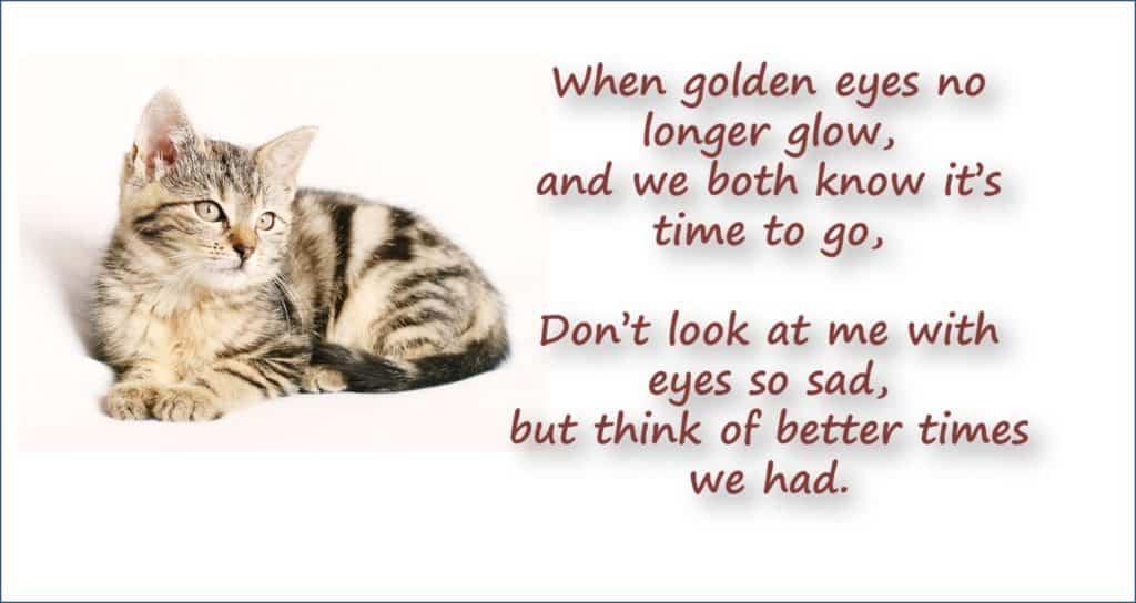 Cat Bereavement Cat Sympathy Card